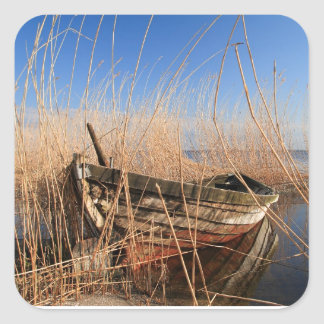 Old wooden boat in the reeds square sticker