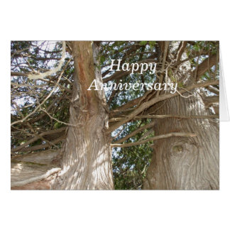Older Cedar tree trunk and branches Card