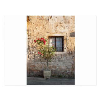 Oleander in Flower-pot, Croatia Postcard