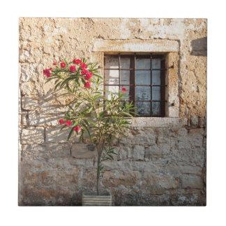 Oleander in Flower-pot, Croatia Tiles