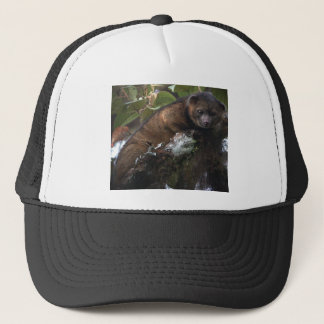 Olinguito (Bassaricyon neblina) new mammal Trucker Hat