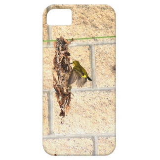 OLIVE BACK SUNBIRD QUEENSLAND AUSTRALIA iPhone 5 CASE