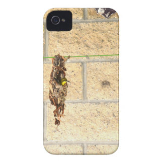 OLIVE BACKED BIRD QUEENSLAND AUSRALIA iPhone 4 Case-Mate CASE