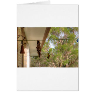 OLIVE BACKED BIRD QUEENSLAND AUSTRALIA CARD