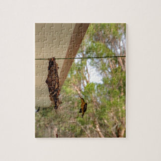 OLIVE BACKED BIRD QUEENSLAND AUSTRALIA JIGSAW PUZZLE