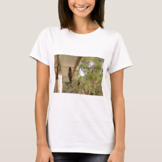 OLIVE BACKED BIRD QUEENSLAND AUSTRALIA T-Shirt