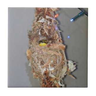 OLIVE BACKED SUNBIRD IN NEST AUSTRALIA CERAMIC TILE