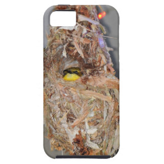 OLIVE BACKED SUNBIRD IN NEST AUSTRALIA iPhone 5 CASES