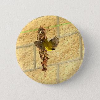 OLIVE BACKED SUNBIRD QUEENSLAND AUSTRALIA 2 INCH ROUND BUTTON