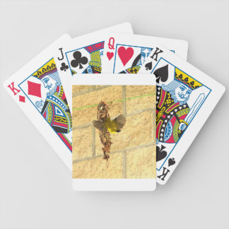 OLIVE BACKED SUNBIRD QUEENSLAND AUSTRALIA BICYCLE PLAYING CARDS
