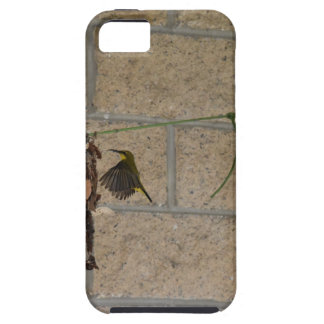 OLIVE BACKED SUNBIRD QUEENSLAND AUSTRALIA CASE FOR THE iPhone 5