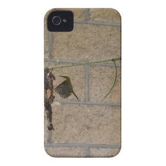 OLIVE BACKED SUNBIRD QUEENSLAND AUSTRALIA iPhone 4 Case-Mate CASE