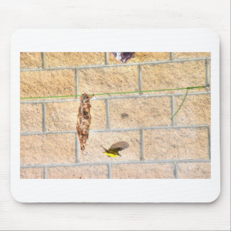 OLIVE BACKED SUNBIRD QUEENSLAND AUSTRALIA MOUSE PAD