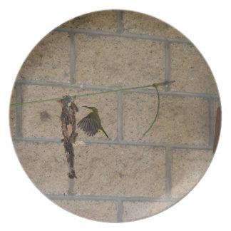 OLIVE BACKED SUNBIRD QUEENSLAND AUSTRALIA PLATE