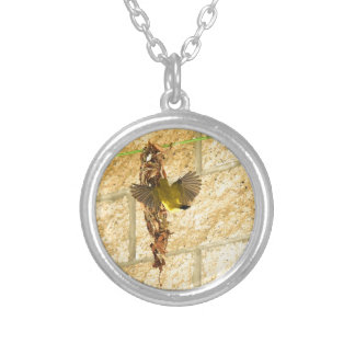 OLIVE BACKED SUNBIRD QUEENSLAND AUSTRALIA SILVER PLATED NECKLACE