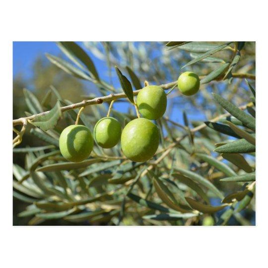 Olive branch postcard