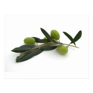 Olive Postcard