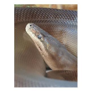Olive Python Postcard