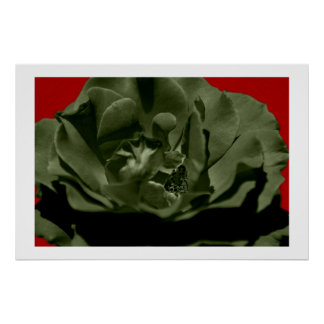 Olive Rose w/Red Anegelhair textured Background  Poster