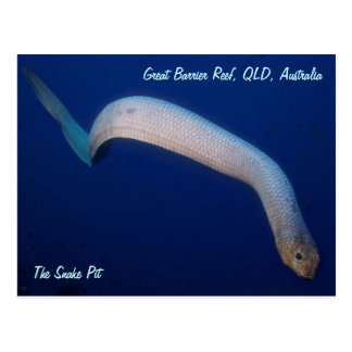 Olive Sea Snake Postcard