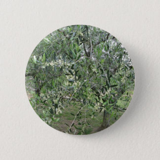Olive tree branches with first buds Tuscany, Italy 2 Inch Round Button
