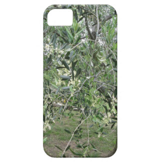Olive tree branches with first buds Tuscany, Italy iPhone 5 Covers