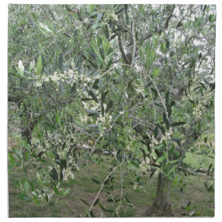 Olive tree branches with first buds Tuscany, Italy Napkin