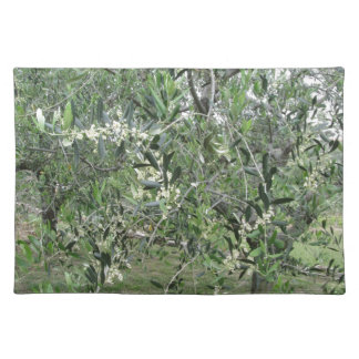 Olive tree branches with first buds Tuscany, Italy Placemat