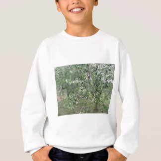 Olive tree branches with first buds Tuscany, Italy Sweatshirt