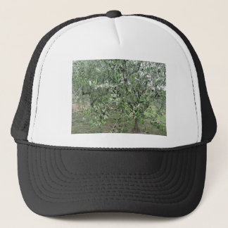 Olive tree branches with first buds Tuscany, Italy Trucker Hat