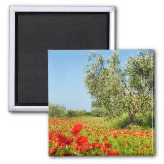 Olive tree in poppy field magnet
