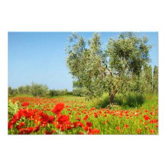 Olive tree in poppy field photo print