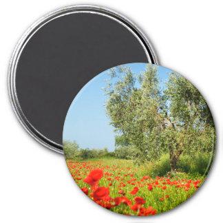 Olive tree in poppy field round magnet