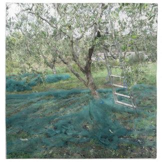 Olive tree in the garden napkin