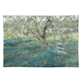 Olive tree in the garden placemat