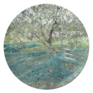 Olive tree in the garden plate
