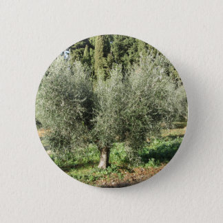 Olive trees in a sunny day. Tuscany, Italy 2 Inch Round Button