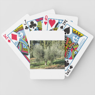 Olive trees in a sunny day. Tuscany, Italy Bicycle Playing Cards