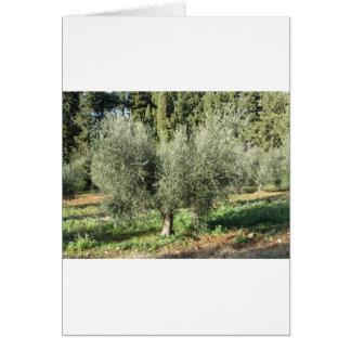 Olive trees in a sunny day. Tuscany, Italy Card