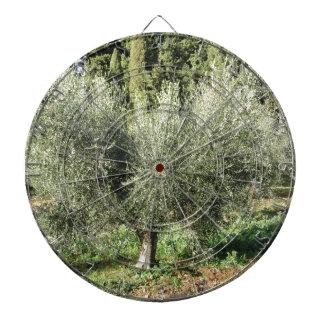 Olive trees in a sunny day. Tuscany, Italy Dartboard