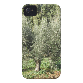 Olive trees in a sunny day. Tuscany, Italy iPhone 4 Case-Mate Case