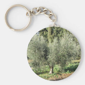 Olive trees in a sunny day. Tuscany, Italy Keychain