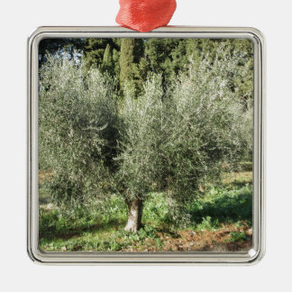 Olive trees in a sunny day. Tuscany, Italy Metal Ornament