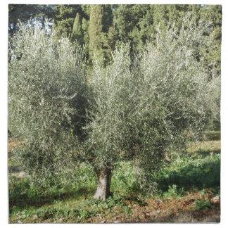 Olive trees in a sunny day. Tuscany, Italy Napkin
