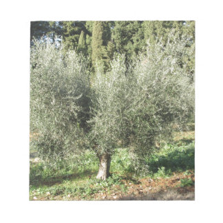 Olive trees in a sunny day. Tuscany, Italy Notepad
