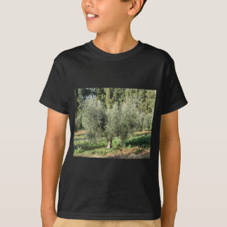 Olive trees in a sunny day. Tuscany, Italy T-Shirt