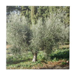 Olive trees in a sunny day. Tuscany, Italy Tile