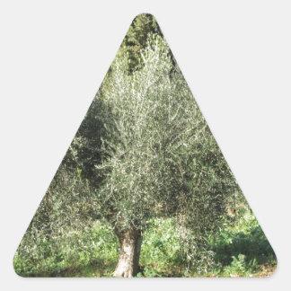 Olive trees in a sunny day. Tuscany, Italy Triangle Sticker