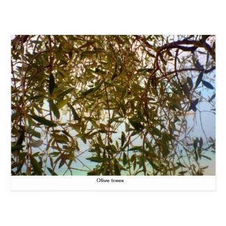 Olive trees postcard