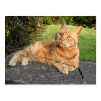 Oliver Cat Postcard